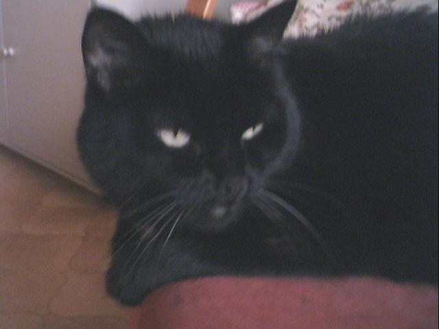 Un site sur notre magnifique chat.